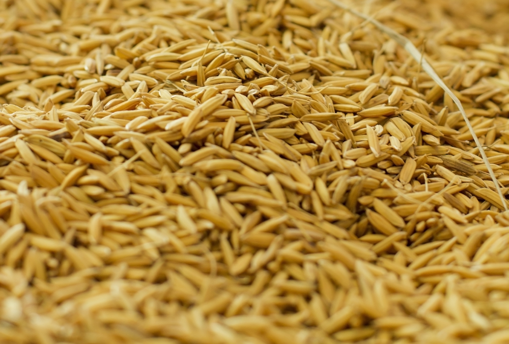What Is the Use of Rice Bran – Discover All Its Benefits